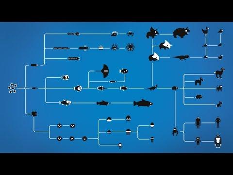 Как работи Еволюцията
